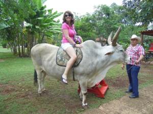 Cuba by Cow!